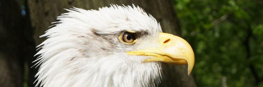 Greifvogelvorführung des Jagdfalkenhofs Schaaf
